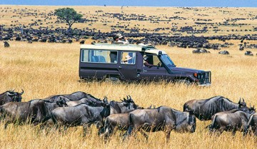Safari Tours in Northern Kenya