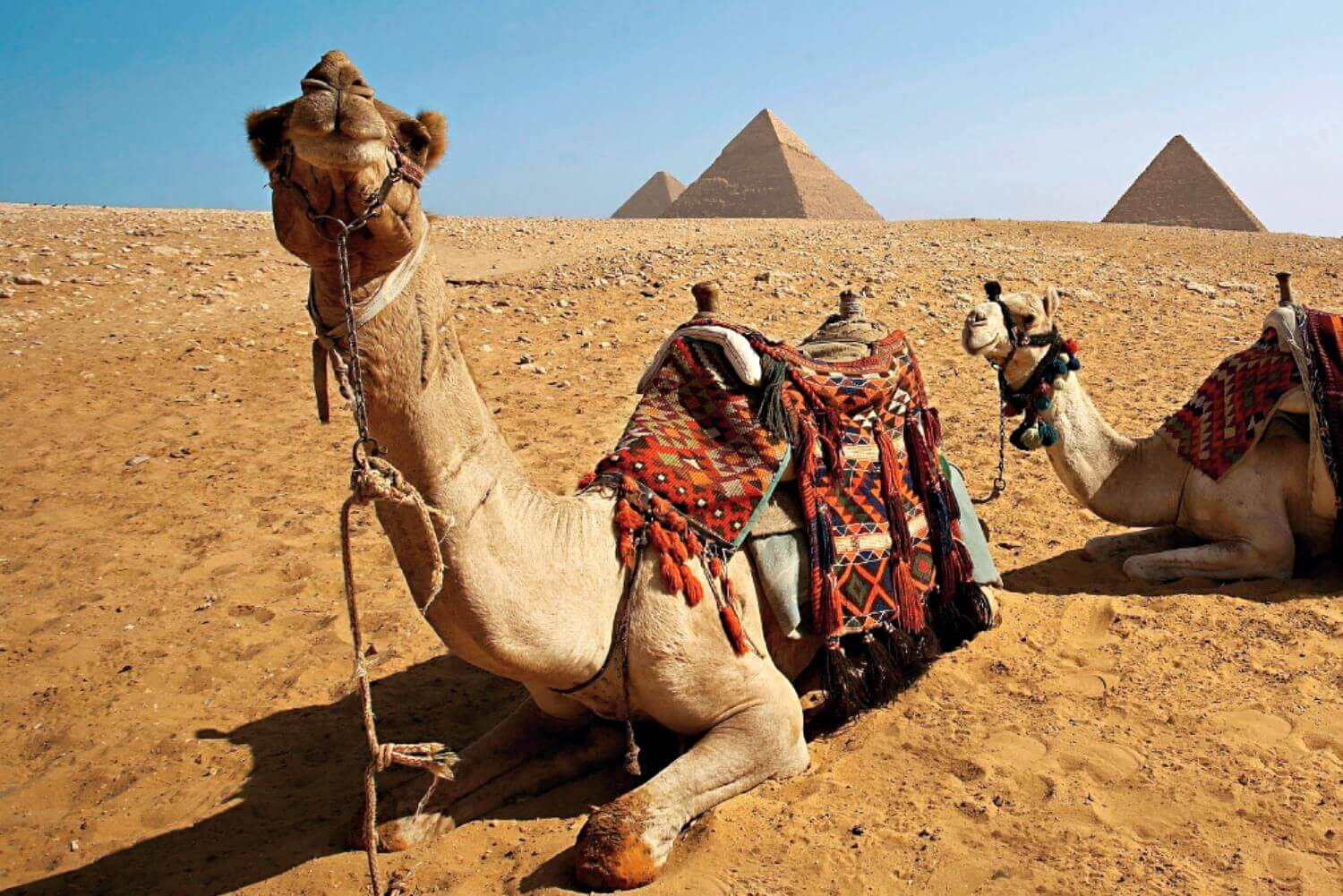 8 days Nile cruise Luxury package from Egypt Us