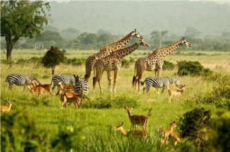 Safari Tours in Northern Kenya